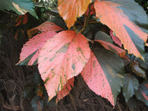 Modelo inconsútil de las hojas florales tropicales Fotografía de archivo