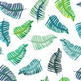Modelo inconsútil de las hojas tropicales Ilustración del vector en el fondo blanco Imagenes de archivo