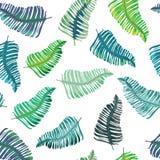 Modelo inconsútil de las hojas tropicales Ilustración del vector en el fondo blanco Fotografía de archivo