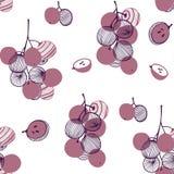 Modelo inconsútil de las uvas violetas Manojo y vid Ejemplo exhausto de la mano del vector fijado en el estilo plano de moda mode ilustración del vector