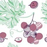Modelo inconsútil de las uvas violetas Manojo y vid Ejemplo exhausto de la mano del vector fijado en el estilo plano de moda mode libre illustration