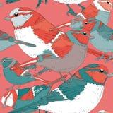 Modelo inconsútil de los diversos pájaros coloridos Ejemplo del vector en fondo rojo claro Pájaros con el FE de la turquesa, del  Foto de archivo