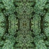 Modelo inconsútil de los elementos naturales de la planta Brotes de flor ligeros de la col ornamental y de las hojas verdes foto de archivo