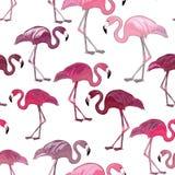 Modelo inconsútil de los flamencos rosados Ilustración del vector en el fondo blanco Fotografía de archivo