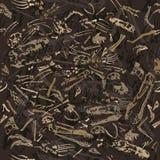 Modelo inconsútil de los huesos de dinosaurio Fotografía de archivo libre de regalías
