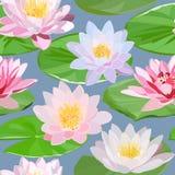 Modelo inconsútil de los lirios de agua blancos y rosados y de las hojas verdes en fondo azul libre illustration