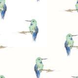 Modelo inconsútil de los pájaros de la acuarela Fotografía de archivo libre de regalías