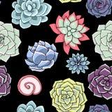 Modelo inconsútil de los Succulents Ornamento suculento ilustración del vector