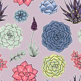 Modelo inconsútil de los Succulents Ornamento suculento libre illustration