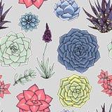 Modelo inconsútil de los Succulents Ornamento suculento stock de ilustración