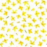 Modelo inconsútil de oro de Bell, suspensa de la forsythia, rama de la primavera con las flores amarillas florecientes fotos de archivo