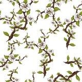 Modelo inconsútil de ramas florecientes de la manzana en un fondo blanco Imágenes de archivo libres de regalías
