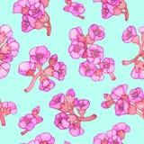 Modelo inconsútil del bergenia del flor rosado del crassifolia Ilustración del vector ilustración del vector