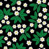 Modelo inconsútil del bordado con poca flor blanca y l verde Foto de archivo