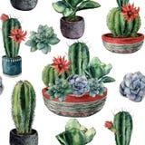Modelo inconsútil del cactus de la acuarela Cirio pintado a mano, echeveria, grusonii del echinocactus con el succulent verde y a Fotografía de archivo libre de regalías