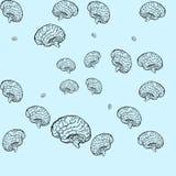 Modelo inconsútil del cerebro Fotografía de archivo
