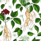 Modelo inconsútil del color del bosquejo botánico realista de la tinta con la raíz, las flores y las bayas del ginseng aisladas e libre illustration
