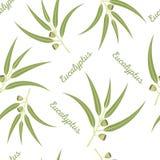 Modelo inconsútil del eucalipto Imagen de archivo libre de regalías