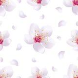 Modelo inconsútil del fondo de la primavera con el flor de Sakura Foto de archivo