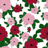 Modelo inconsútil del hibisco del rosa de la flor del vector Foto de archivo libre de regalías