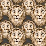 Modelo inconsútil del león Ejemplo del vector en fondo marrón Fotos de archivo libres de regalías