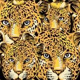Modelo inconsútil del leopardo Ejemplo del vector en fondo negro Fotos de archivo