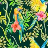 Modelo inconsútil del Macaw Flor y hojas tópicas, hibisco Loro tropical exótico Vector para su diseño Foto de archivo