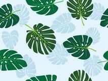 Modelo inconsútil del monstera de la hoja del tema tropical verde del vector Fotografía de archivo libre de regalías
