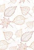 Modelo inconsútil del otoño con contornos coloreados de las hojas Imagen de archivo libre de regalías