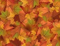 Modelo inconsútil del otoño, vector Imágenes de archivo libres de regalías