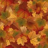 Modelo inconsútil del otoño, vector Imagen de archivo
