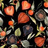 Modelo inconsútil del physalis de la acuarela ejemplo de la baya del otoño Fotografía de archivo libre de regalías