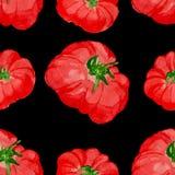 Modelo inconsútil del tomate de la acuarela Fotos de archivo libres de regalías