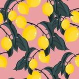 Modelo inconsútil del vector con el árbol de limón tropical Foto de archivo libre de regalías