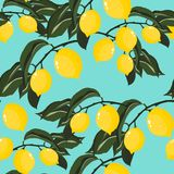 Modelo inconsútil del vector con el árbol de limón tropical Fotografía de archivo libre de regalías