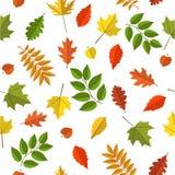 Modelo inconsútil del vector con las hojas de otoño coloridas Fotos de archivo