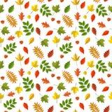 Modelo inconsútil del vector con las hojas de otoño coloridas Imagen de archivo