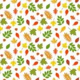 Modelo inconsútil del vector con las hojas de otoño coloridas Fotografía de archivo