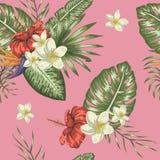 Modelo inconsútil del vector de hojas tropicales verdes con plumeria y de flores del hibisco en fondo rosado ilustración del vector