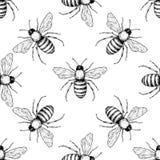 Modelo inconsútil del vector de la abeja Fondo dibujado mano del insecto Foto de archivo libre de regalías