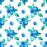 Modelo inconsútil del vector hermoso con los arándanos frescos naturales Acuarela dibujada mano azul, violeta y verde brillante Imágenes de archivo libres de regalías