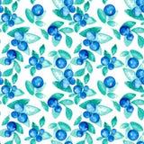 Modelo inconsútil del vector hermoso con los arándanos frescos naturales Acuarela dibujada mano azul, violeta y verde brillante Imagen de archivo libre de regalías