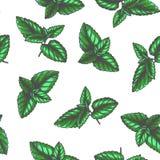Modelo inconsútil del vintage del vector con las hojas de menta en el grabado de estilo Textura botánica del color exhausto de la imagenes de archivo