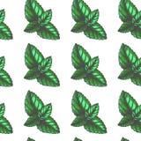 Modelo inconsútil del vintage del vector con las hojas de menta en el grabado de estilo Textura botánica del color exhausto de la foto de archivo