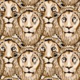 Modelo inconsútil dibujado mano de los leones Ejemplo del vector en fondo marrón claro Fotografía de archivo