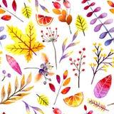 Modelo inconsútil drenado mano Hojas y bayas del bosque de la acuarela Ramas botánicas abstractas del otoño Guelder, arce Fotos de archivo