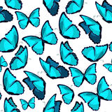 Modelo inconsútil el illust azul del vector del monarca del morpho de la mariposa Fotos de archivo libres de regalías
