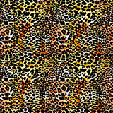 Modelo inconsútil exótico del leopardo de la moda libre illustration