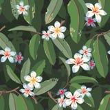 Modelo inconsútil exótico floral tropical del vector Fotos de archivo