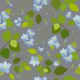 Modelo inconsútil floral brillante hermoso elegante de la primavera Imagen de archivo libre de regalías